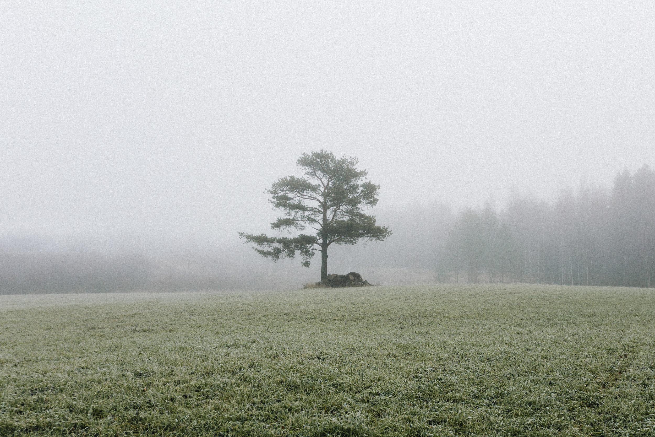 Solo_tree_pirkkala.jpg