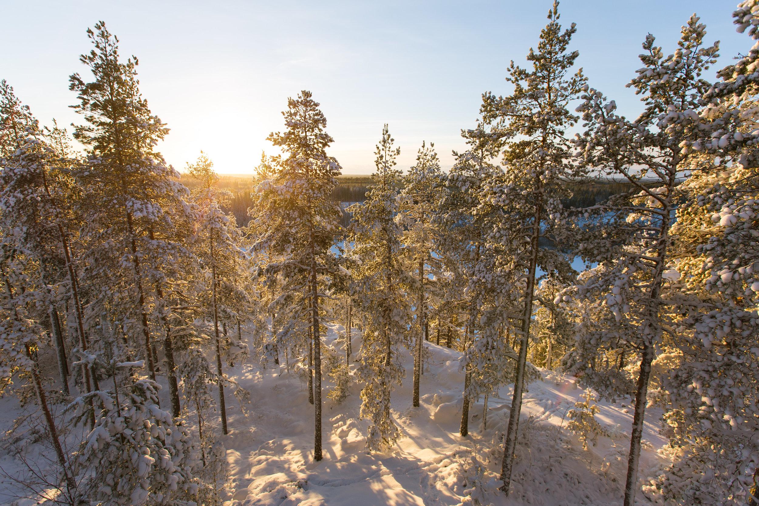 metsä talvella-aurinko2.jpg