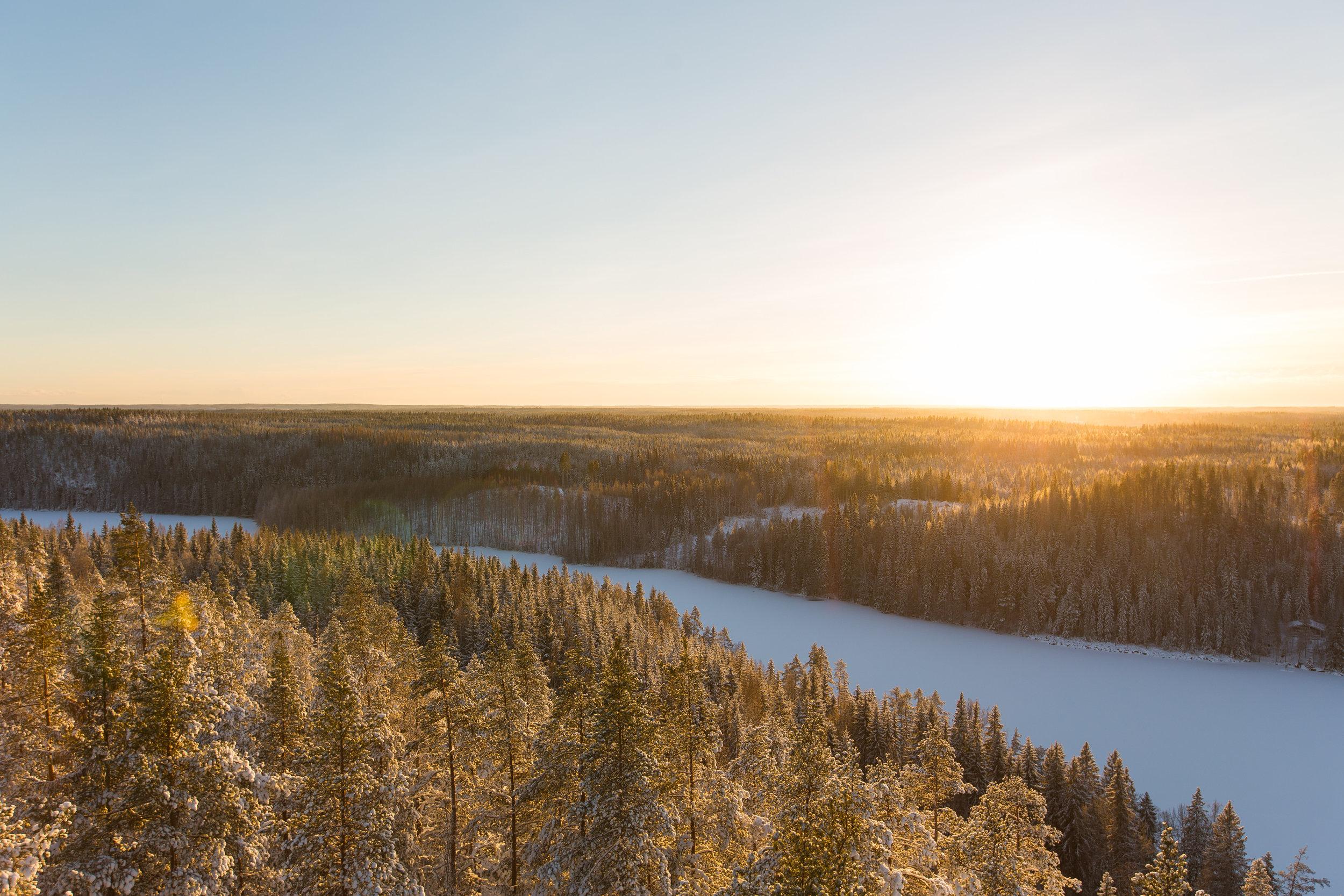 metsä talvella-aurinko.jpg