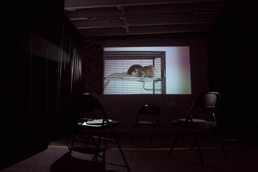 Installation view of  It Could Have Been  (2017) by Liinu Grönlund