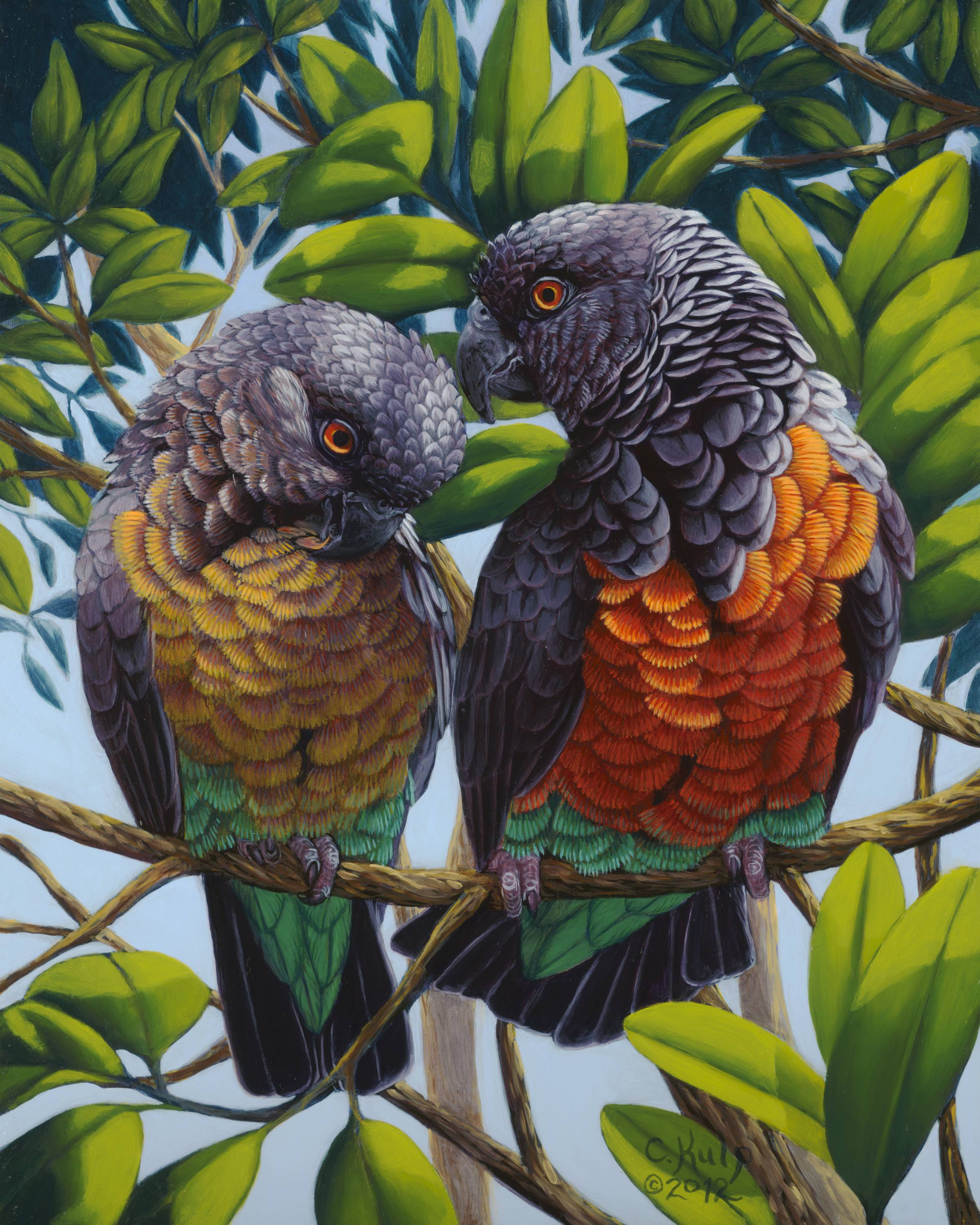 "Cindy Kulp,   Red-Bellied Parrots  , 16"" x 13"", oil on canvas"