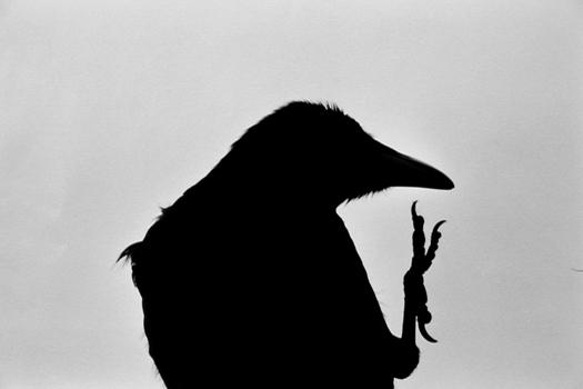 Masahisa Fukase. Erimo Cape, Japan (from the series The Solitude of Ravens). 1976