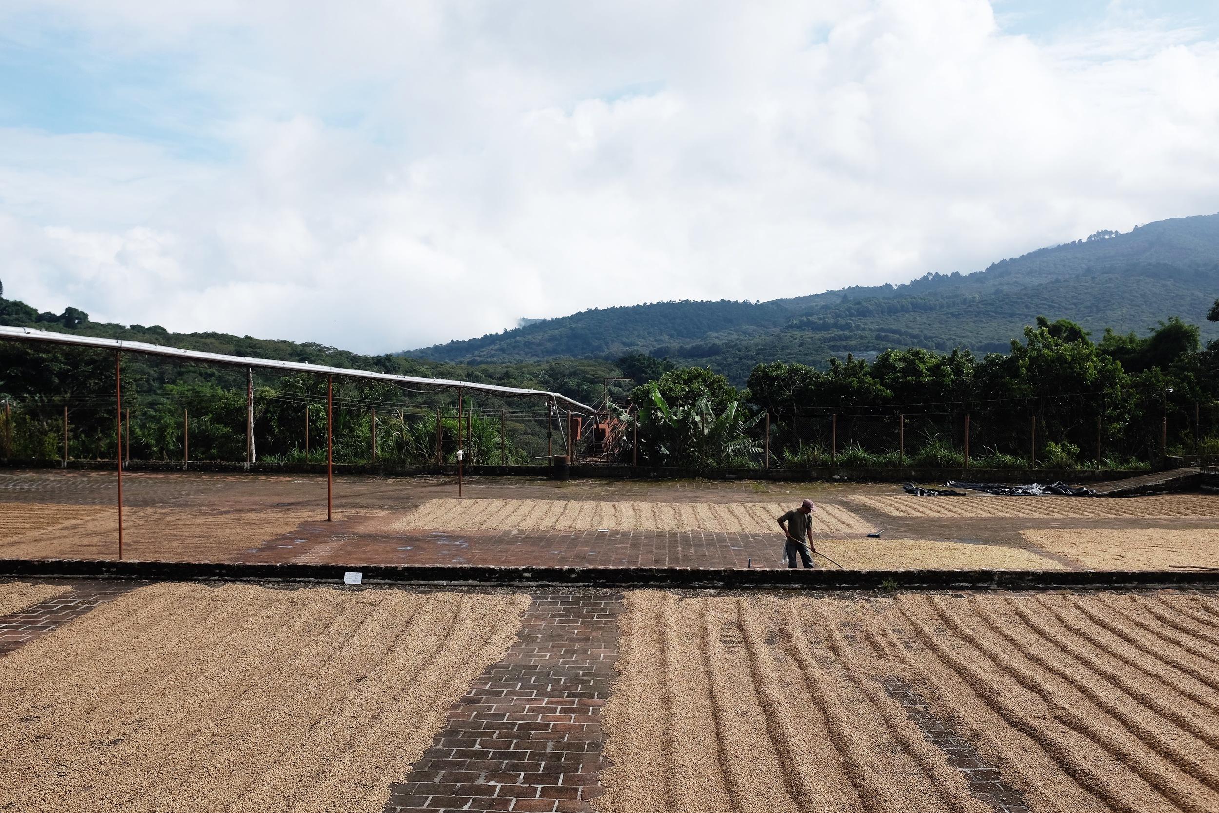 Finca  El Carmen, a coffee plantation off the  Rutas   de las Flores.