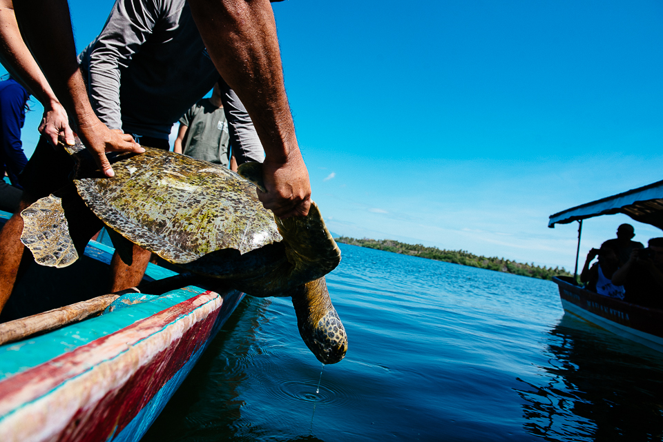 After recording their measurements and tagging them, the marine biologists release the turtles back into the Bay.