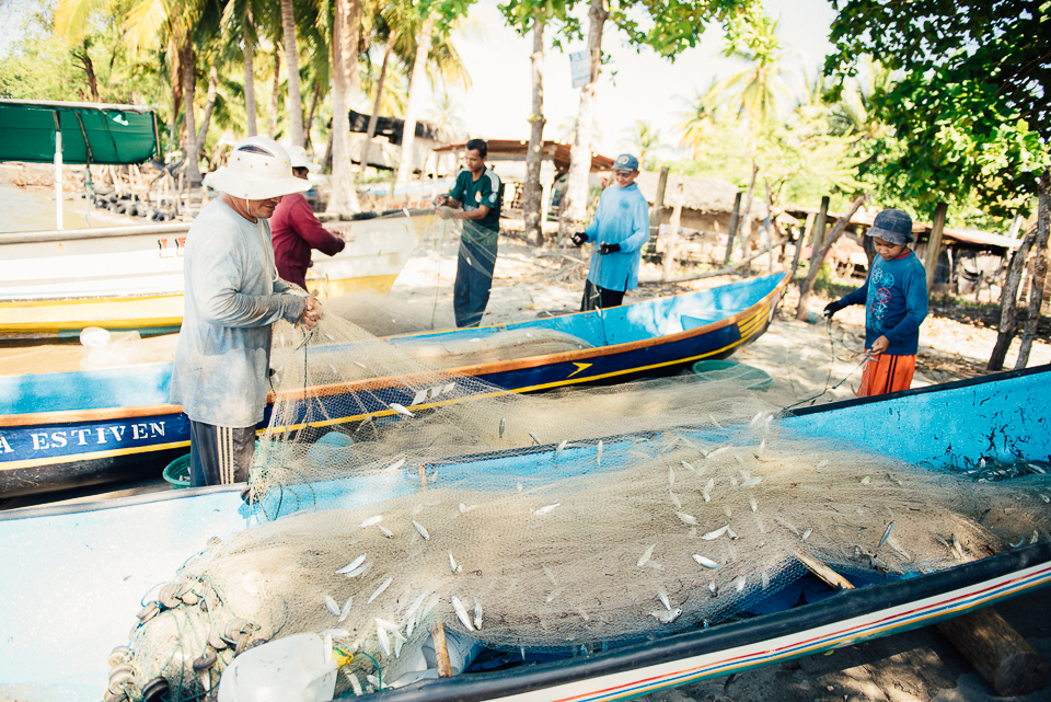 Isla la Pirraya residents catch many different kinds of fish for commercial and personal use. Here, they pick sardines out of a drag net by hand.