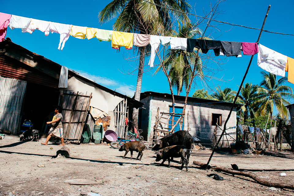 Laundry hangs drying as pigs roam looking for food in the town center of Isla la Pirraya. The community has a school for local children and a small medical clinic.