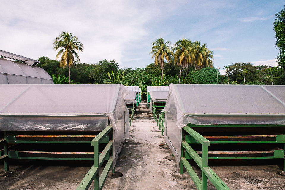 Cacao is placed in these drying racks for the final stage of drying in their processing.