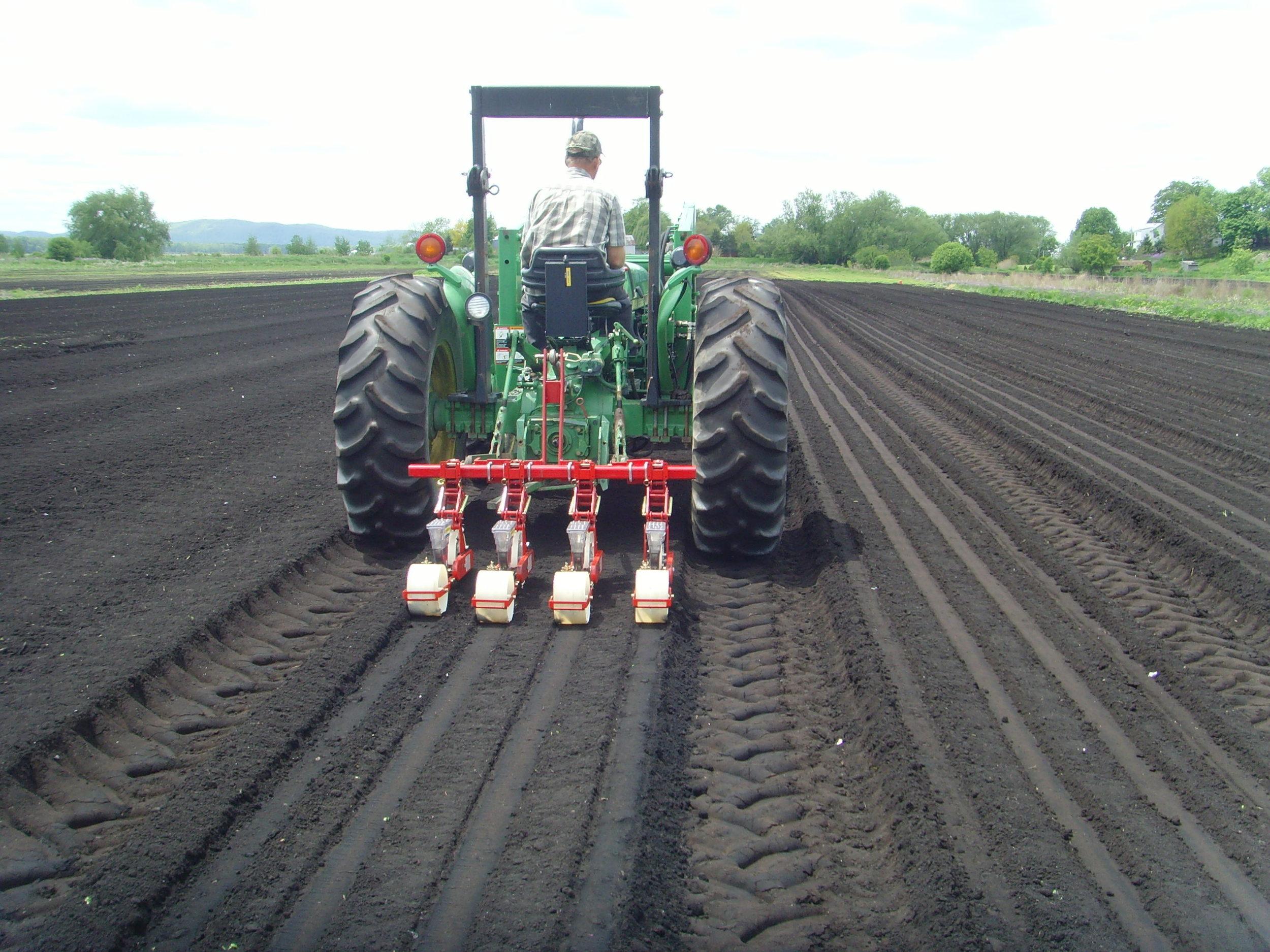 Basil being seeded in field 002.jpg