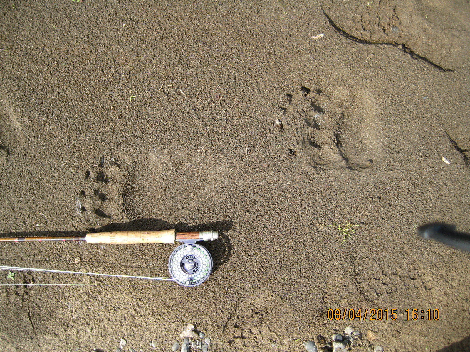 """My rod is lying next to the bear's back footprint, a hair shy of 12"""" long. Just behind that is the bear's front foot, about 6""""-7"""" across, thus rendering a bear about six or seven feet tall (so they told me), which if actually witnessed would appear to be fifteen or twenty feet tall. The spotted tracks are mine, and based on the 1/16 of Cherokee blood coursing through my veins, I judge the tracks almost concurrent. :/"""