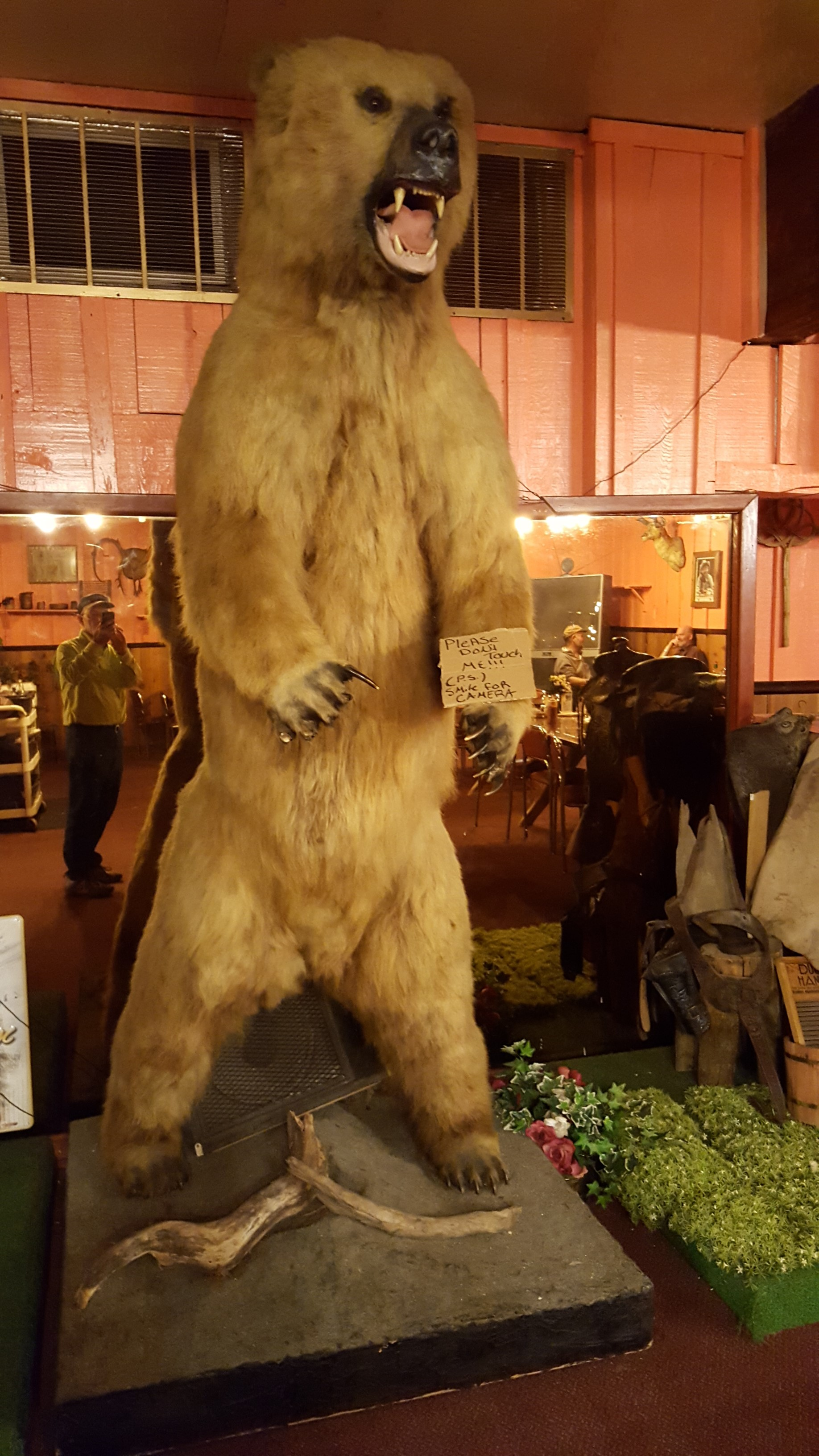 I was having dinner and this bear showed up. So, I decided to take a picture.