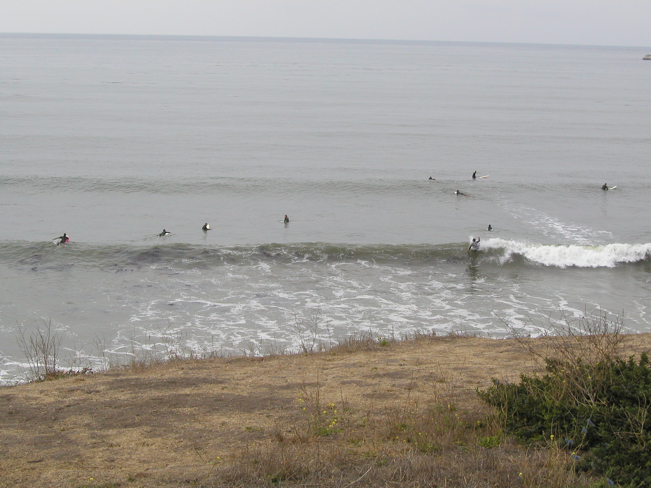 Pacific surfers