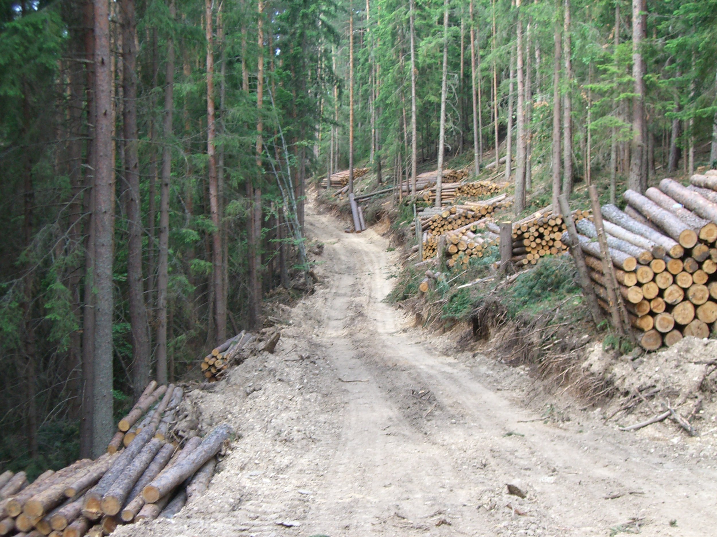Yundola logging road.JPG
