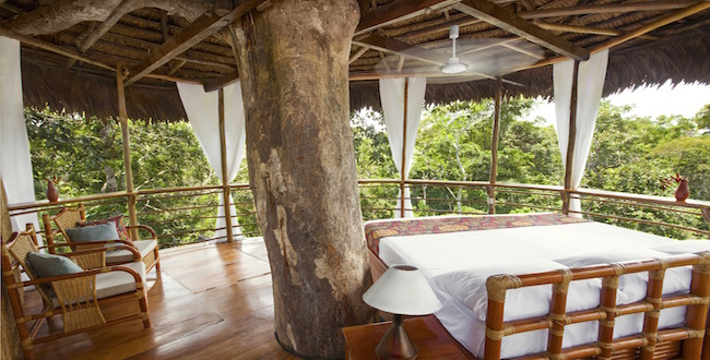 tree house lodge amazon