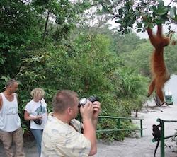 Monkey Jungle Reserve