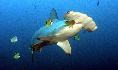 galapagos marinelife