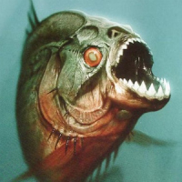 monster piranha