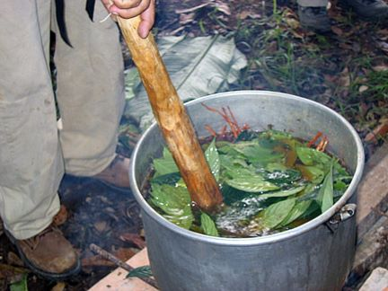 Preparing Ayahuasca