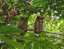 sacha lodge wildlife
