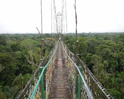 jungle canopy walk