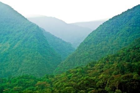 Bolivia Amazon Tours rainforest