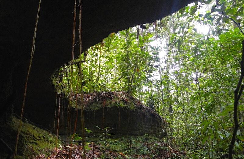 Brazilian Amazon Jungle