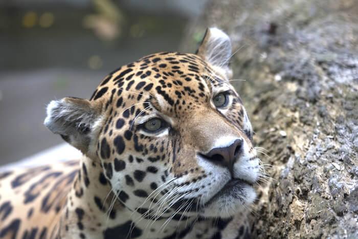 Quistococha Zoo, Iquitos