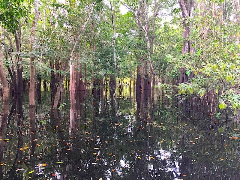 Exploring Ecosystems of Largo Januari