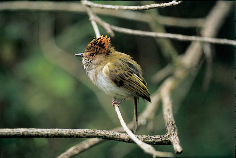 Bird Watching at the Pacaya Samiria Lodge