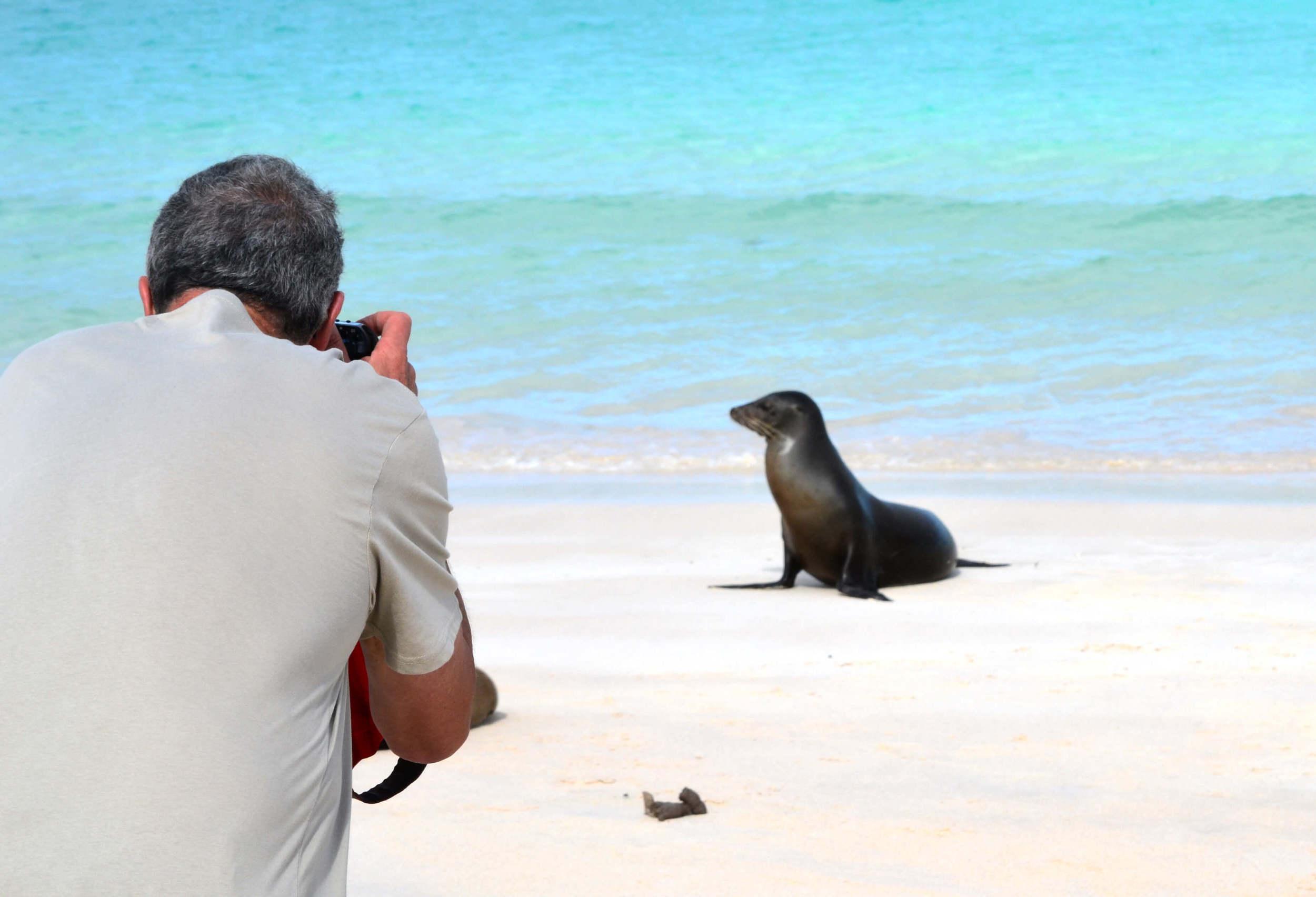 Ocean Spray sea lion
