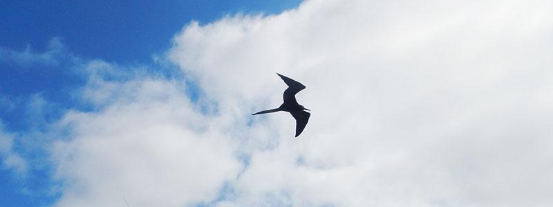 Galapagos birdwatching