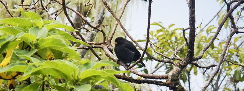 Galapagos birds
