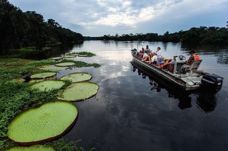 Skiff ride observing Amazon Victoria water lilies- Delfin Amazon Cruise