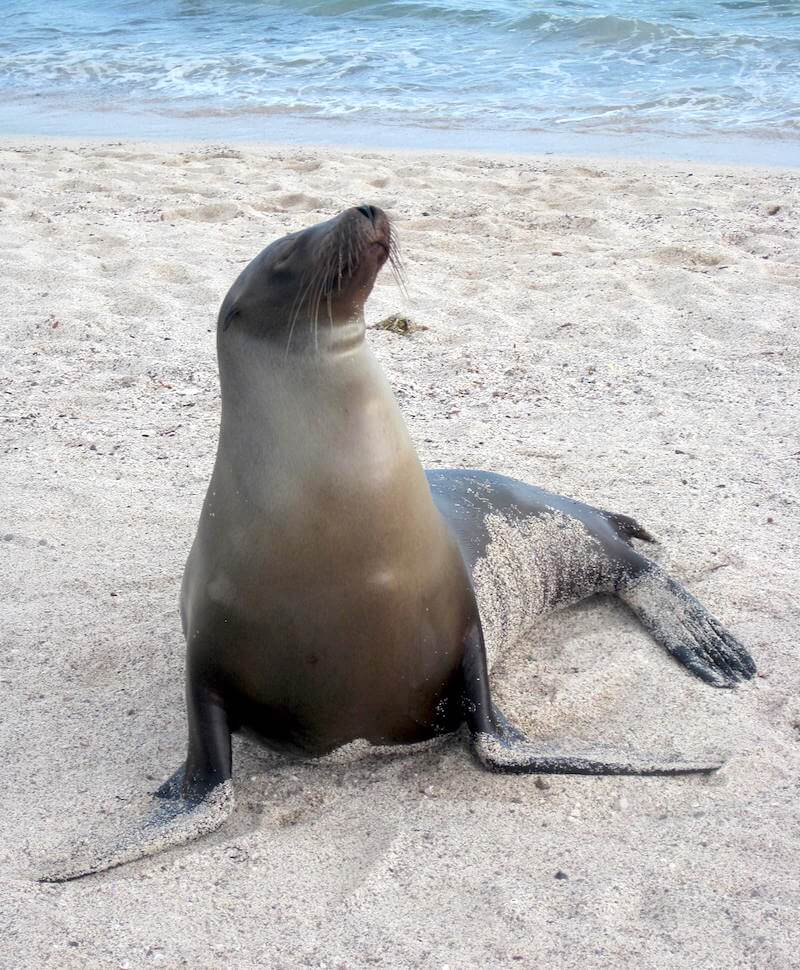 First sight of Sealions on San Cristobal Island