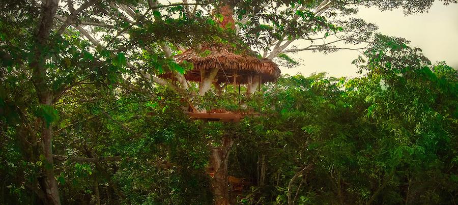 Treehouse Lodge Peru Bungalow 8