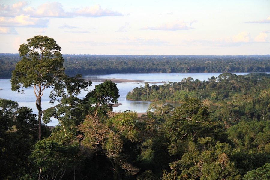 Napa River in the Amazon rainforest