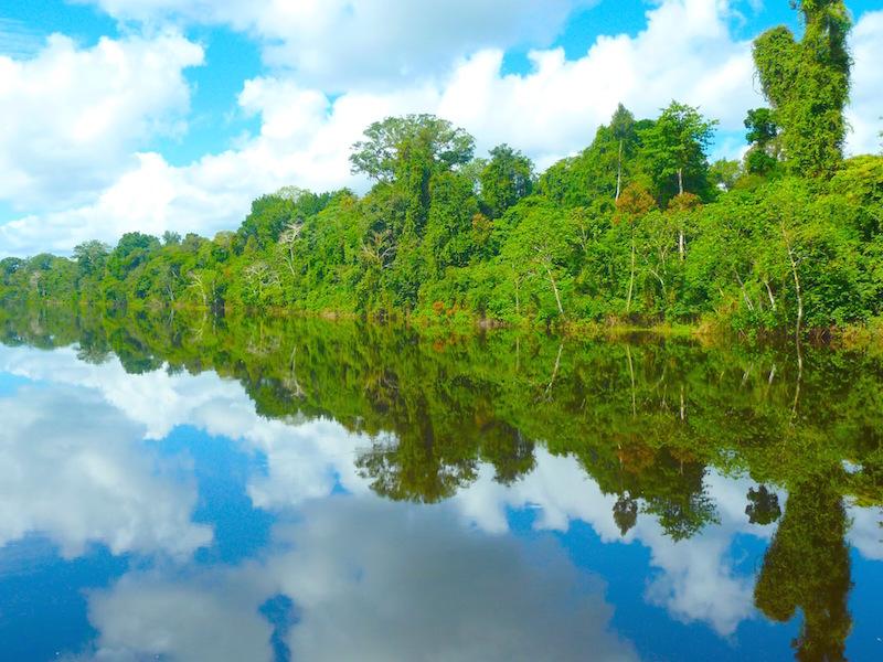 Amazon Rainforest reflections.