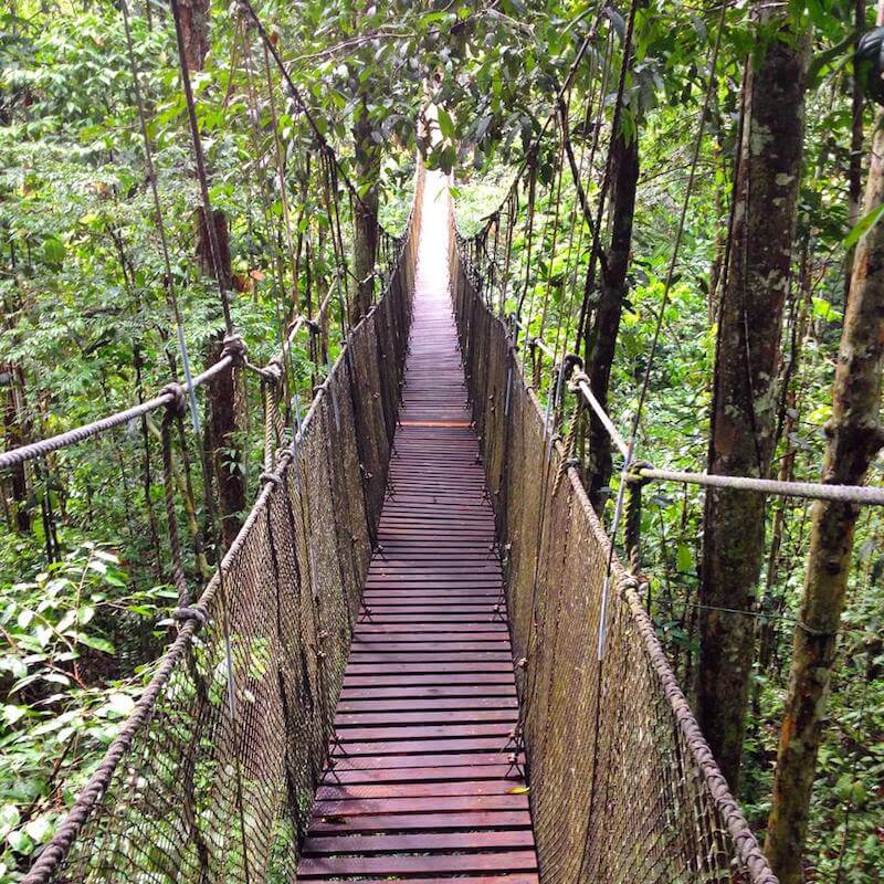 500m Canopy Walk!