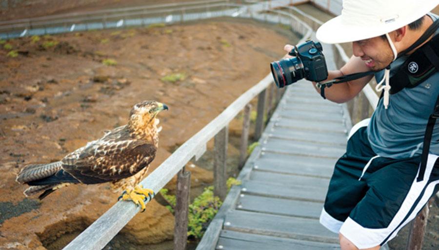 Cormorant wildlife safari cruise