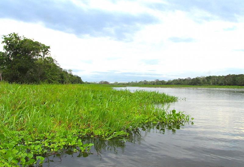 Amazon ecosystems