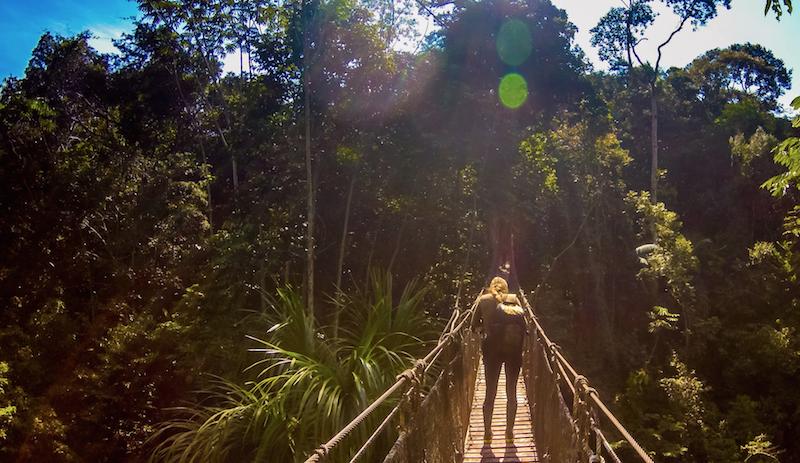 amazon canopy bridge