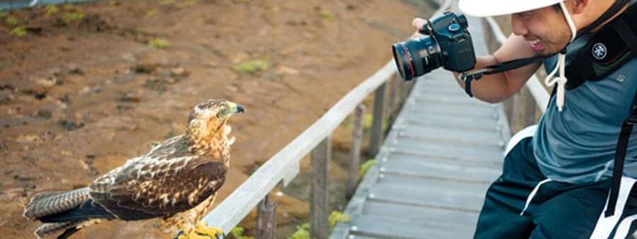 Galapagos Hawk on Bartholomew