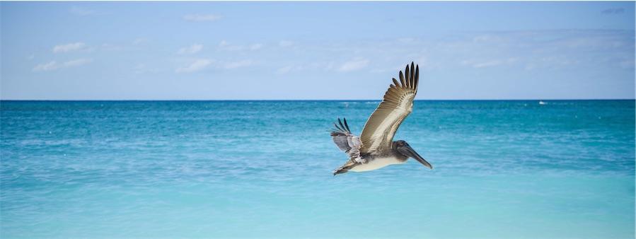 Galapagos Flights