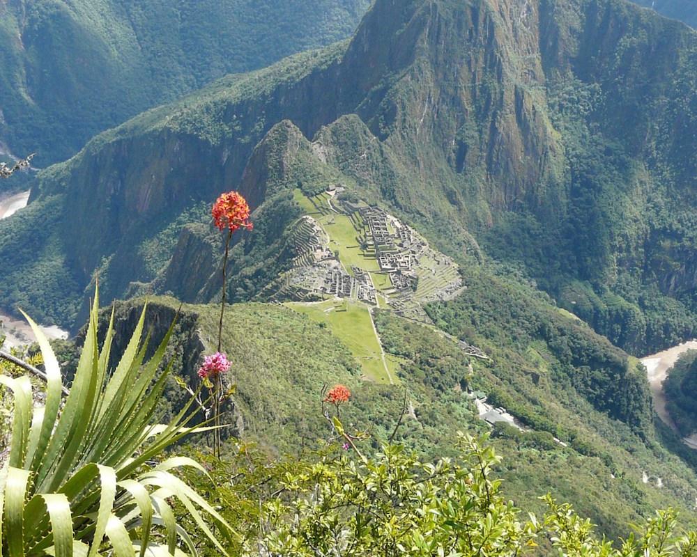 Orchids Machu Picchu