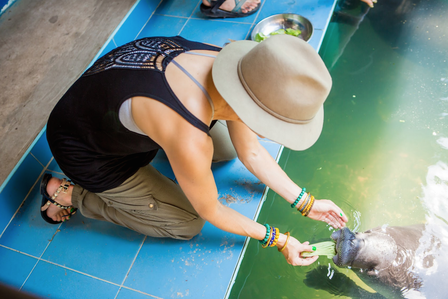 Feeding Manatees at the Manatee Rescue Center in Peru
