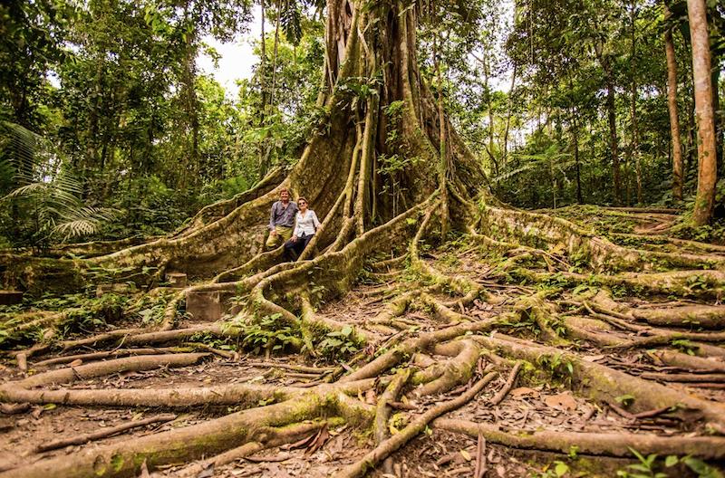 Peruvian Amazon Jungle