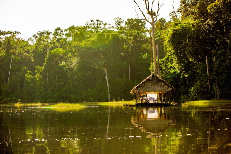 The magical Amazon rainforest.