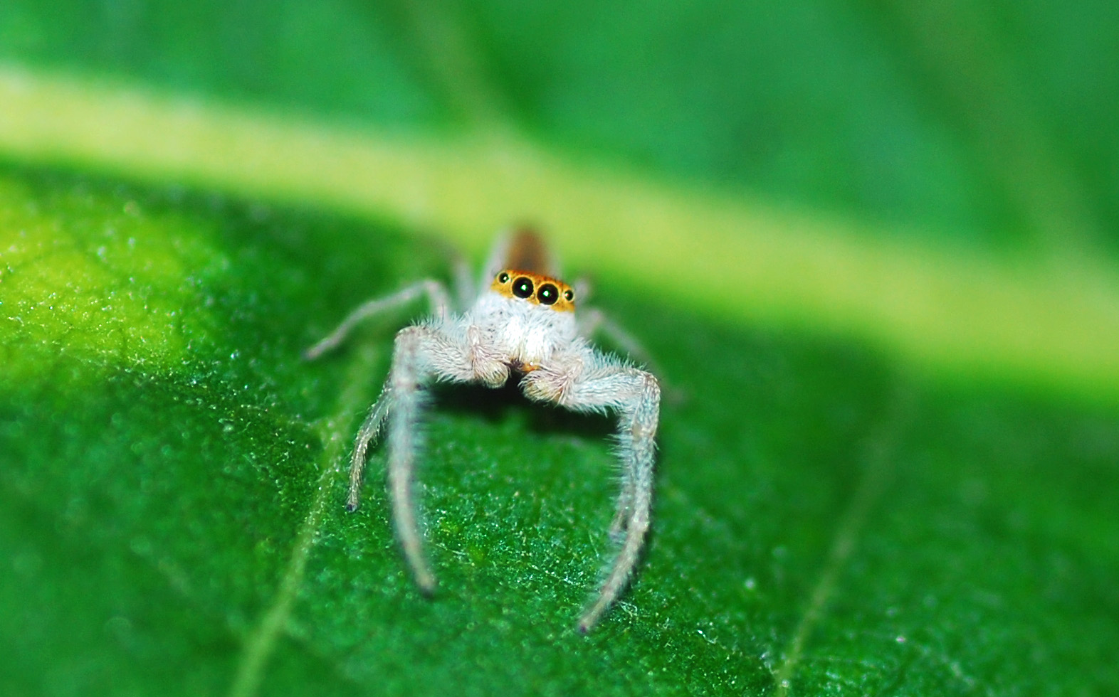 Spiders of the Amazon | Rainforest Cruises