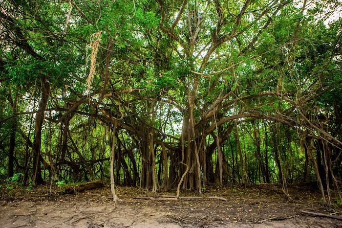 Amazon Jungle Canopy