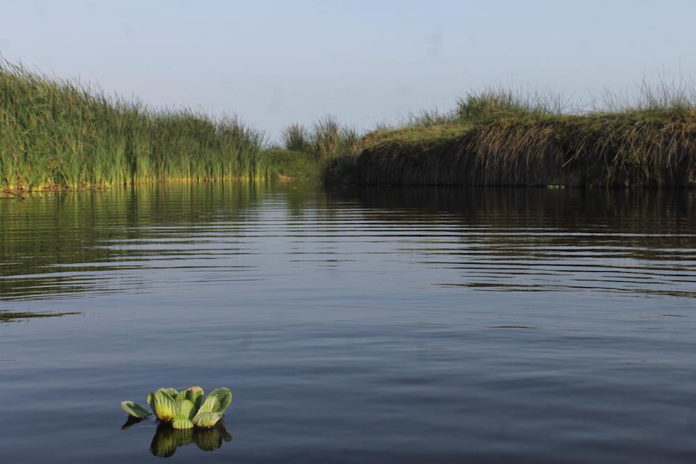 Laguna Genesis