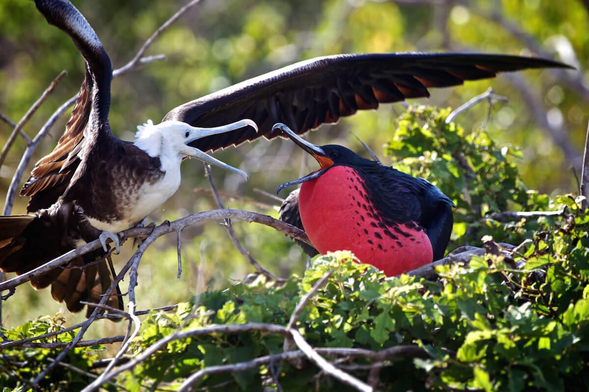 Galapagos Birding